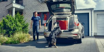 For many people, dogs are a part of the family. But whereas most people wouldn't dream of allowing their children to travel unrestrained, the same is not true for their pets.